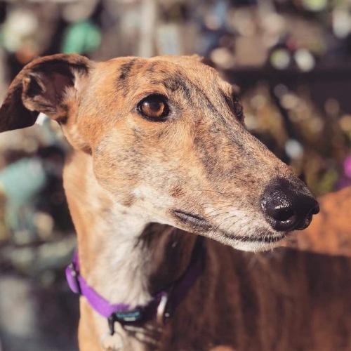 Team Inch | Sighthound Rescue